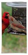Cardinal Kiss Beach Towel