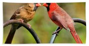 Cardinal Love Beach Towel