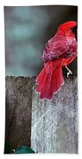 Cardinal Beach Towel
