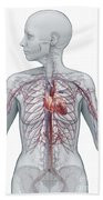 Cardiovascular System Female Beach Towel