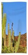 Cardon Cactus In Bahia Kino-sonora-mexico Beach Towel