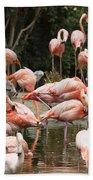 Caribbean Flamingos - Phoenicopterus Ruber Ruber Beach Towel