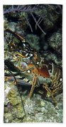 Caribbean Reef Lobster On Night Dive Beach Towel