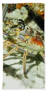 Caribbean Spiny Reef Lobster  Beach Towel