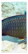 Caribbean Stoplight Parrot Fish In Rainbow Colors Beach Towel
