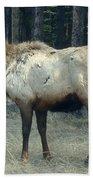 Elk Side Profile - Banff, Alberta Beach Towel