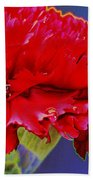 Carnation Carnation Beach Towel