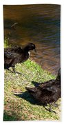 Carpenters Park-ducks Beach Towel