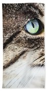 Cat Art - Looking For You Beach Towel by Sharon Cummings