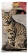 Cat In Aegina Island Beach Towel