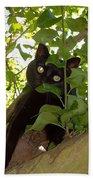 Cat In Tree Beach Towel