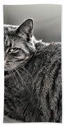 Cat In Window Beach Towel