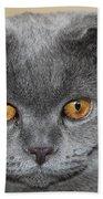 Cat Martin Beach Towel