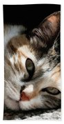 Cat Napping In The Sun By David Perry Beach Towel