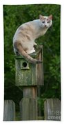 Cat Perched On A Bird House Beach Towel