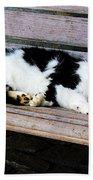 Cat Sleeping On Bench Beach Towel