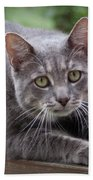Cat Stretch Beach Towel