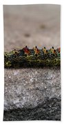 Caterpillar Beach Towel