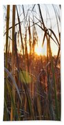 Cattails And Reeds - West Virginia Beach Towel