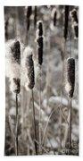 Cattails In Winter Beach Towel by Elena Elisseeva