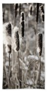 Cattails In Winter Beach Towel