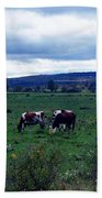 Cattle At Pasture Beach Towel