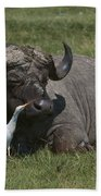 Cattle Egret With Cape Buffalo Beach Towel