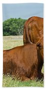 Cattle Grazing In Field Beach Towel