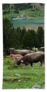 Cattle Grazing In The Pyrenees Beach Towel