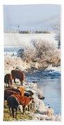 Cattle In Winter Beach Towel