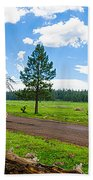 Cattles Roaming Through Hawley Lake Arizona Beach Towel