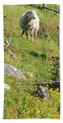 Cautious Sheep In The Pasture Beach Towel