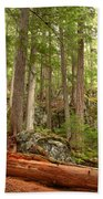 Cedar Logs At Garibaldi Beach Towel