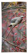 Cedar Waxwing Feeding Beach Towel