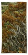 Cedars In The Fall Beach Towel