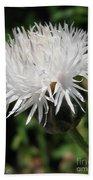 Centaurea Named The Bride Beach Towel