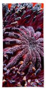 Center Of Attention  Beach Towel