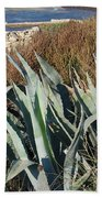 Century Plant 1 Beach Towel