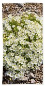 Cerastium Uniflorum Beach Towel