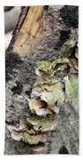 Violet-toothed Polypore Beach Towel