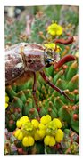 Chafer Beetle On Medusa Succulent Beach Towel