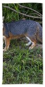 Channel Island Fox Beach Towel
