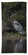Charleston Birds Beach Towel