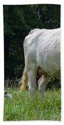 Charolais Cow And Calf In Field Beach Towel