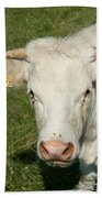 Charolais Cow Beach Towel