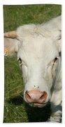 Charolais Cow Beach Towel