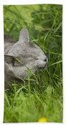Chartreux Cat And Grass Beach Towel