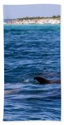Chasing Dolphins  Beach Towel