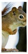 Chatty Squirrel Beach Towel