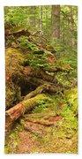 Cheakamus Old Growth Cedar Stumps Beach Towel